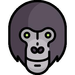 Gorila Senior